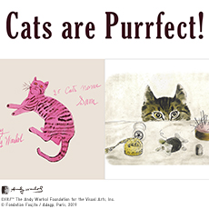 Cats Are Purrfect